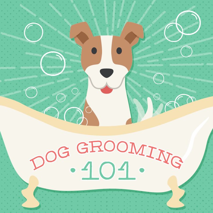 You know it's time for a dog grooming appointment when…